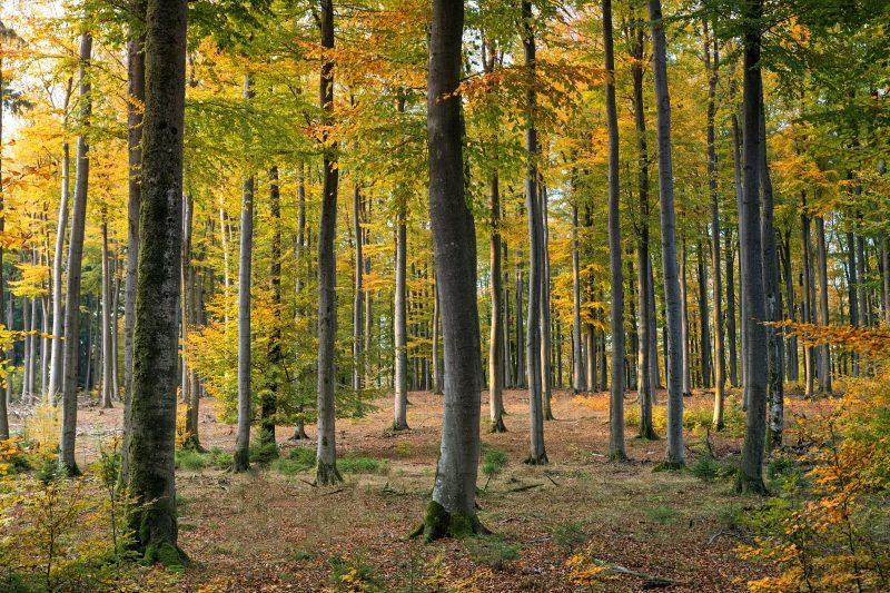 """Einladung zur Veranstaltung """"Die Zukunft des Waldes"""""""